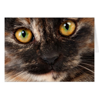 Tortoiseshell Cat Greeting Card
