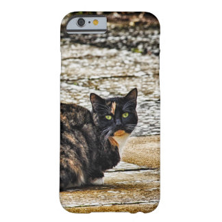 Tortoiseshell Cat iPhone 6 case