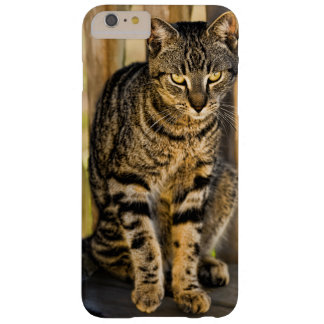 Tortoiseshell Cat Portrait, Closeup Animal Photo Barely There iPhone 6 Plus Case