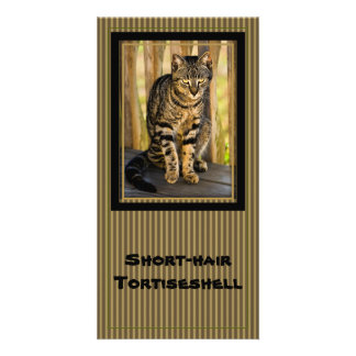 Tortoiseshell Cat Portrait, Closeup Animal Photo Card