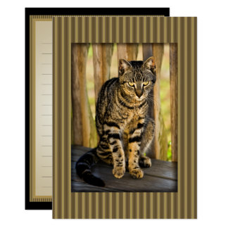 Tortoiseshell Cat Portrait, Closeup Animal Photo Card