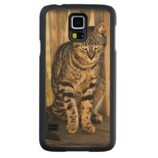 Tortoiseshell Cat Portrait, Closeup Animal Photo Carved Maple Galaxy S5 Slim Case