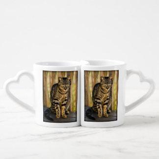 Tortoiseshell Cat Portrait, Closeup Animal Photo Coffee Mug Set