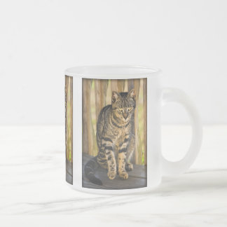 Tortoiseshell Cat Portrait, Closeup Animal Photo Frosted Glass Coffee Mug
