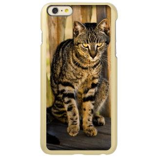 Tortoiseshell Cat Portrait, Closeup Animal Photo Incipio Feather® Shine iPhone 6 Plus Case