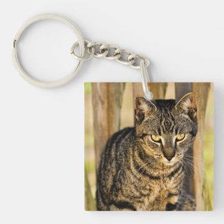 Tortoiseshell Cat Portrait, Closeup Animal Photo Keychain