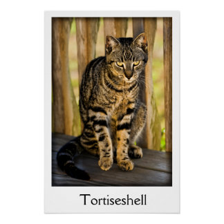 Tortoiseshell Cat Portrait, Closeup Animal Photo Poster