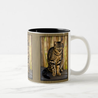 Tortoiseshell Cat Portrait, Closeup Animal Photo Two-Tone Coffee Mug