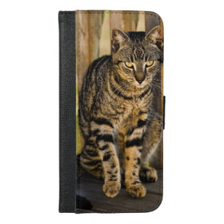 Tortoiseshell Cat Portrait, Closeup Photo iPhone 6/6s Plus Wallet Case