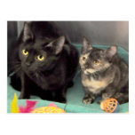 Tortoiseshell Kitten/Black Cat Postcards