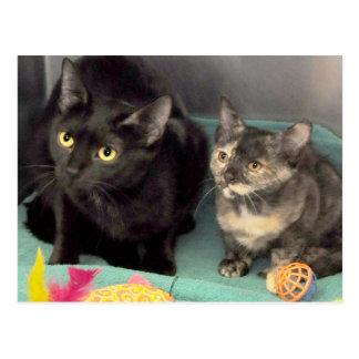 Tortoiseshell Kitten/Black Cat Postcards