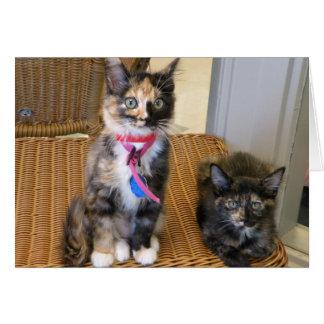 Tortoiseshell Kitties Card