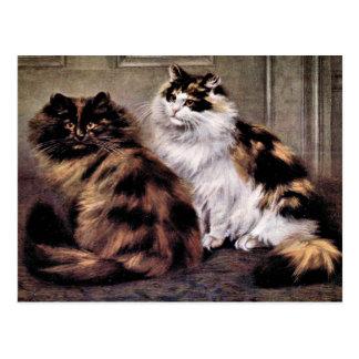 Tortoiseshell Persian Cats Art Postcard