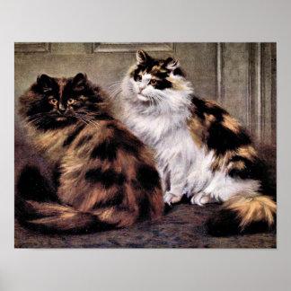 Tortoiseshell Persian Cats Art Poster