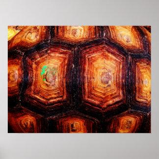 Tortoiseshell Poster