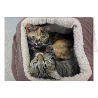 Tortoiseshell & Tabby Cats Card