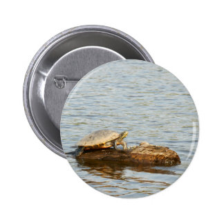 Tortuga acuática de Talquin Pin Redondo 5 Cm
