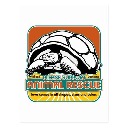Tortuga animal del rescate postal
