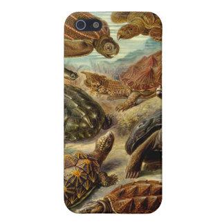 Tortuga (Chelonia) por Haeckel iPhone 5 Fundas