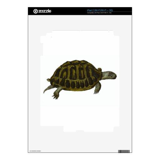 Tortuga de caja calcomanía para el iPad 2