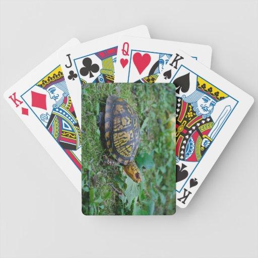 Tortuga de caja del este cartas de juego