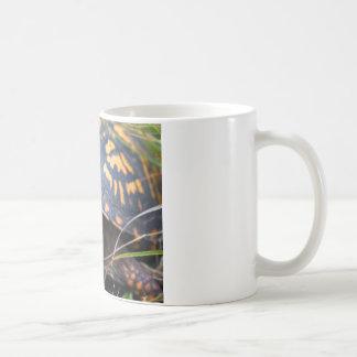 Tortuga de caja taza de café