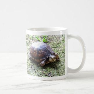 Tortuga de caja - trayectoria cubierta de musgo taza de café