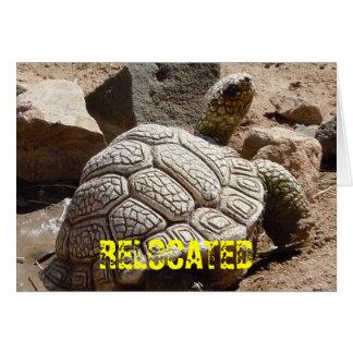 Tortuga de desierto linda - cambio de dirección tarjeta pequeña