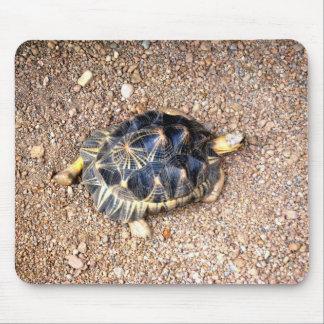 tortuga de desierto tapetes de ratón