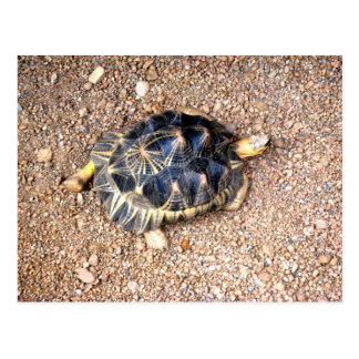tortuga de desierto tarjeta postal