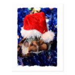 Tortuga de fango con la cabeza cubierta en el gorr tarjetas postales