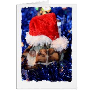 Tortuga de fango con la cabeza cubierta en el tarjeta de felicitación