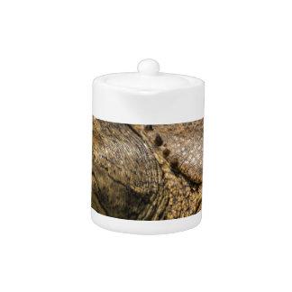 Tortuga de Floriday Softshell - ferox de Apalone