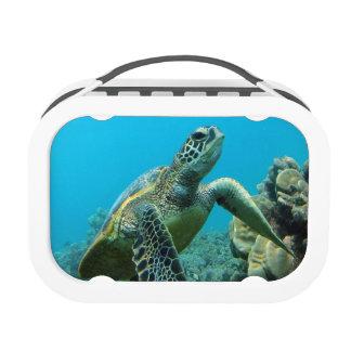 Tortuga de Hawaii de la bahía de Hanauma
