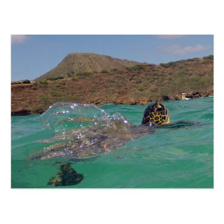 Tortuga de Hawaii de la bahía de Hanauma Postal