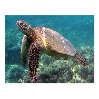 Tortuga de Hawaii de la bahía de Hanauma Tarjetas Postales
