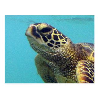 Tortuga de Hawaii Honu Tarjetas Postales