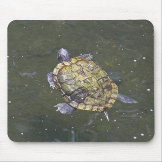 Tortuga de la natación en el jardín botánico de Si