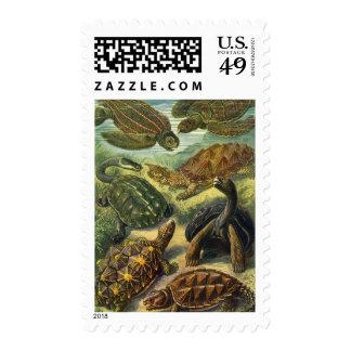 Tortuga de la tierra de las tortugas de mar del timbre postal