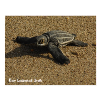 Tortuga de Leatherback del bebé Tarjetas Postales