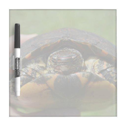 Tortuga de madera adornada a disposición pizarra blanca