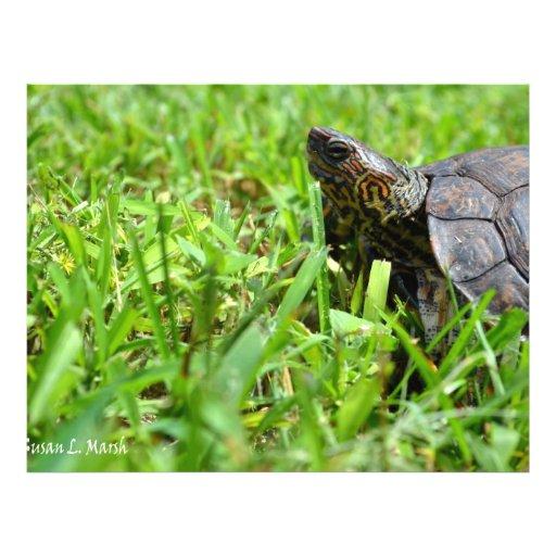 tortuga de madera adornada que mira a la izquierda flyer a todo color