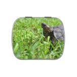 tortuga de madera adornada que mira a la izquierda jarrones de caramelos