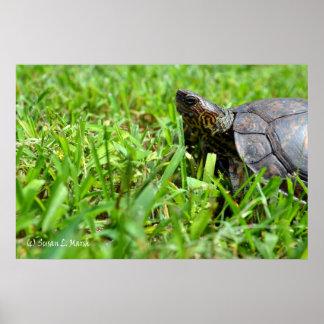 tortuga de madera adornada que mira a la izquierda póster