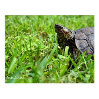 tortuga de madera adornada que mira a la izquierda tarjetas postales