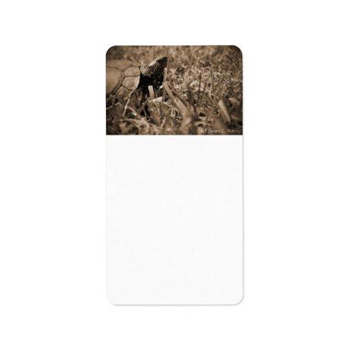 tortuga de madera adornada que mira sepia correcta etiquetas de dirección