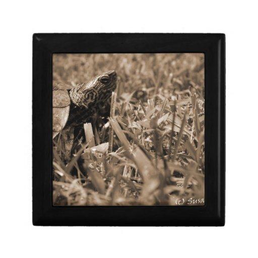 tortuga de madera adornada que mira sepia correcta joyero cuadrado pequeño