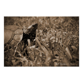 tortuga de madera adornada que mira sepia correcta póster