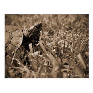 tortuga de madera adornada que mira sepia correcta tarjetas postales