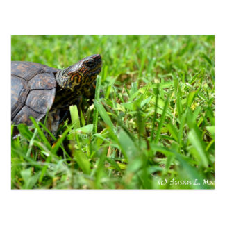 tortuga de madera adornada que parece derecha postal